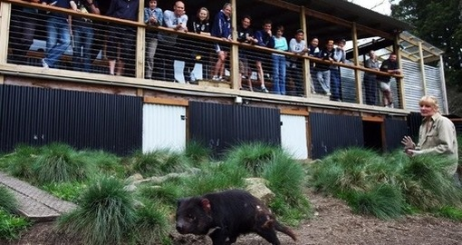 Spend some time with Tasmanian devils on your trip to Australia