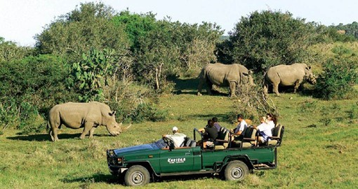 Game Drive in Kariega Game Reserve