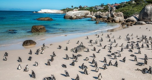 See the Penguin Colony at Boulders Beach during your South African tour.