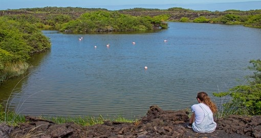See Resident Flamingoes in the Galapagos Islands during your Ecuador vacation.