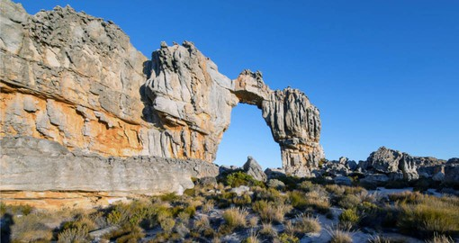 The Cedarberg mountain range is named after the endangered Clanwilliam cedar