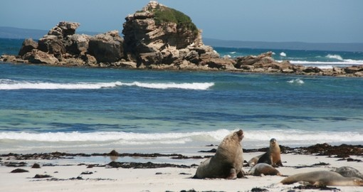 Sea Lions on a beach on Kangaroo Island