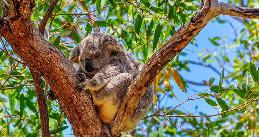 Get up close and personal with aussie wildlife at the Koala Sanctuary on Magnetic Island