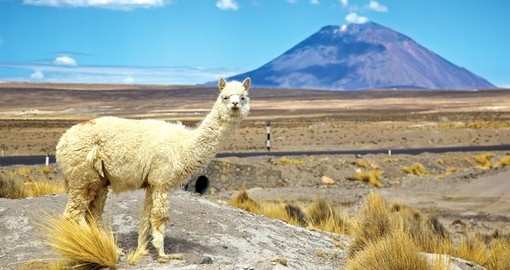 "The high plains - Altiplano - or Peru with the ""locals"""