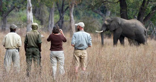 Experience Walking Safari in South Luangwa Park during your next trip to Zambia.