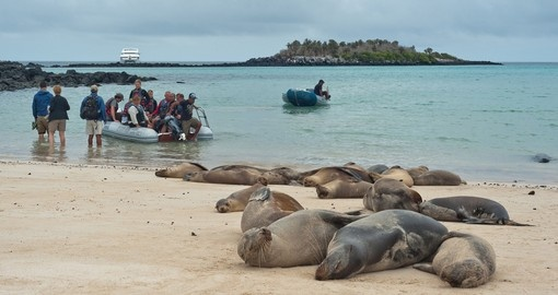 Daily life in the Galapagos