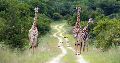Your Zimbabwe tour includes a visit to Hwange National Park.