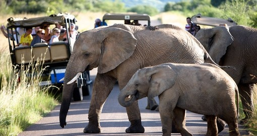 Elephants on a Game Drive