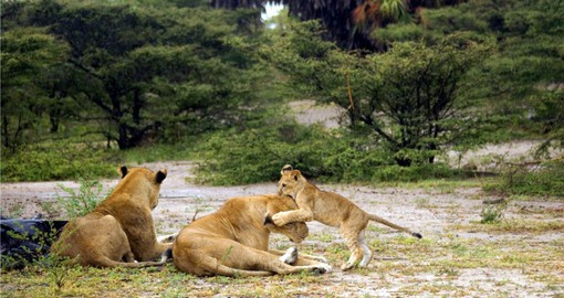 Visit and explore Selous National Park during your next Tanzania safari.
