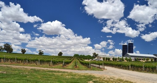 Explore the winery in the Hunter Valley on your next trip to Australia