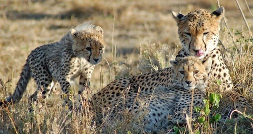 Game drives at Dulini are taken by professional and passionate rangers and trackers