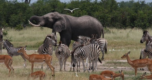 Explore Chobe National Park and wild life animals in it during your next trip to Zimbabwe.