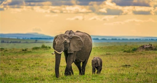 Finish your Kenya vacation in Masai Mara National Reserve home of the mighty African Elephant