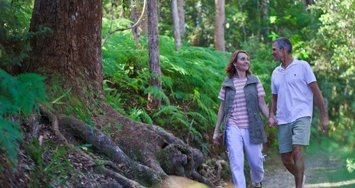 Experience Hinterland Hiking on your next Australia vacations.