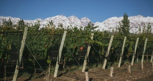 At an altitude of 1250 meters and a semi-desert climate provide ideal conditions for winemaking