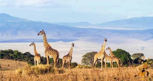 Spectacular wildlife seen in its natural environment on your Tanzania vacation
