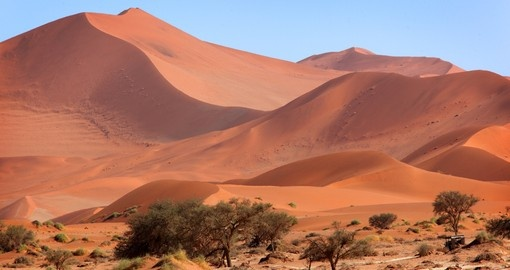 You will have to see this amazing Sossusvlei sand dunes on your next South Africa tours.