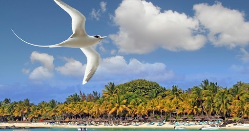 White bird flying over tropical beach Mauritius