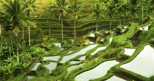 You will be able to visit local farms in Ubud during your next trip to Indonesia.