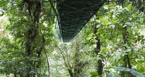 Walks the Hanging Bridge, Cloud Forest, Monteverde on your trip to Costa Rica
