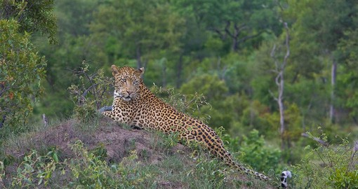 Sabi Sabi supports over 300 species of birds, 47 large mammal and 57 species of reptile
