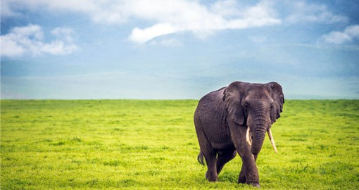 Tanzania travel includes a visit to the Ngorongoro Crater and it's heards of African Elephants