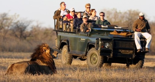 Enjoy your game drives and explore these animals in reserve during your next trip to South Africa.