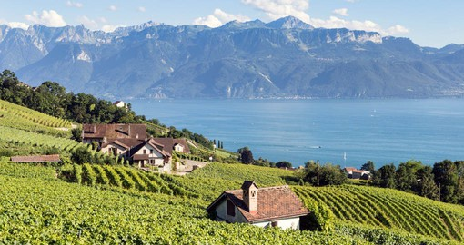 Lausanne is surrounded by vineyard-covered slopes, with Lake Geneva at its feet