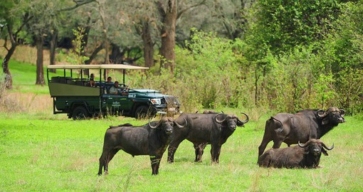 "Stanley & Livingstone features ""Big Five"" safari drives on the game reserve"