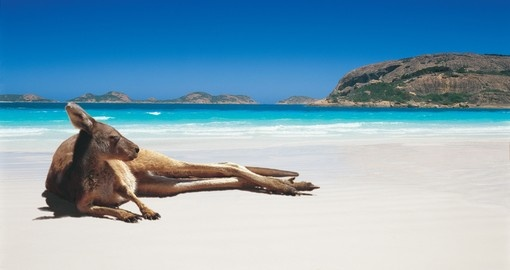 Esperance - kangaroo on Lucky Bay Beach