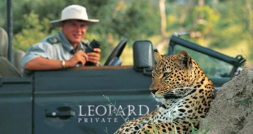 Game drive viewing Leopards