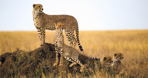 Marvel at the wildlife in the Serengeti National Park on your Tanzania Safari