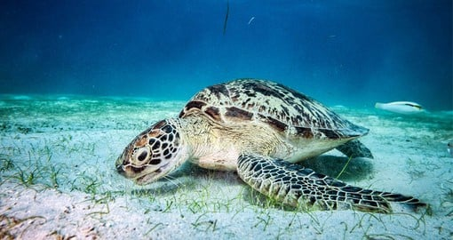 El Nido is home to more than 850 species of fishes, 120 of corals, 5 of sea turtles