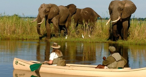 Chiawa Camp canoeing with an elephant, a must-do during your Zambia tour.