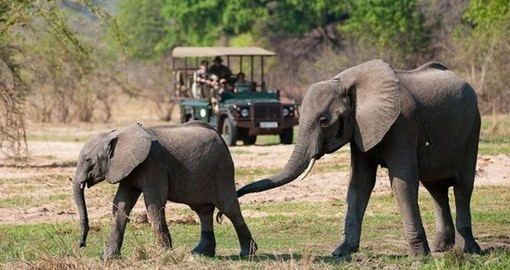 Your Zambia Safari begins in South Luangwa National Park