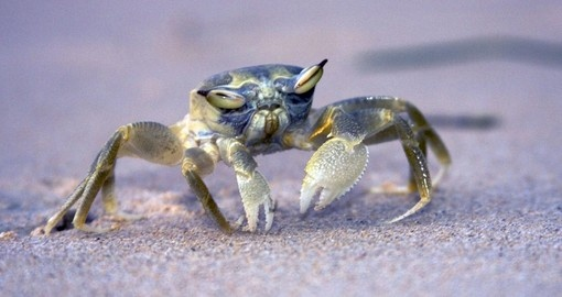A crab on the beach at sunset