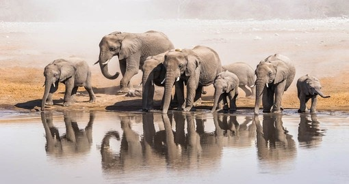 Visit Etosha National Park during your Namibia vacation.