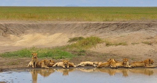 Explore the Serengeti and watch everyday life of wild life in it during your next trip to Tanzania.