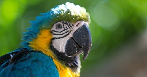 colombia nature and wildlife goway travel