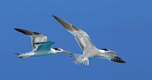 Watch birds of Pemba and enjoy this natures beauty during your next Tanzania tours.