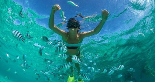 Snorkel in the Indian Ocean during your Seychelles vacation.