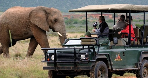 Elephants up close on a game drive
