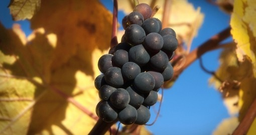 The region is ideal for growing grapes