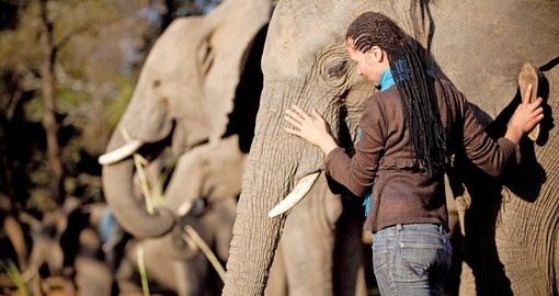 On your South Africa safari get to know the African Elephants
