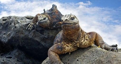 Galapagos Islands Ecuador Ecuador Vacation Goway - Galapagos vacations