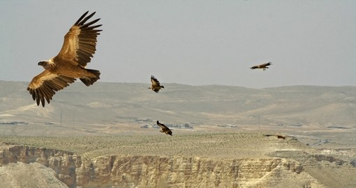 Vultures soaring over desert