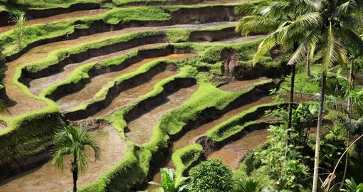 Rice terraces on the island of Bali