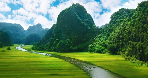 Rice field and river