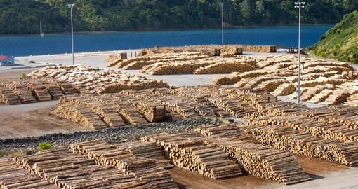 Timber logs in the port of Picton