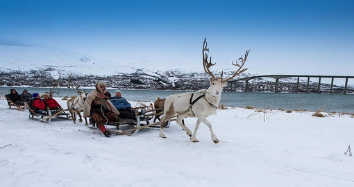Enjoy a day of Reindeer Sledding on your Norway Vacation